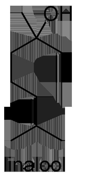 ヤブニッケイ 化学構造式3