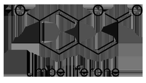 アキグミ 化学構造式2