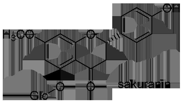 エドヒガン 化学構造式2