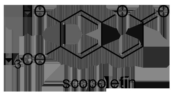 キダチニンドウ 化学構造式3