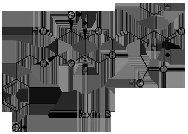 クロガネモチ 化学構造式2