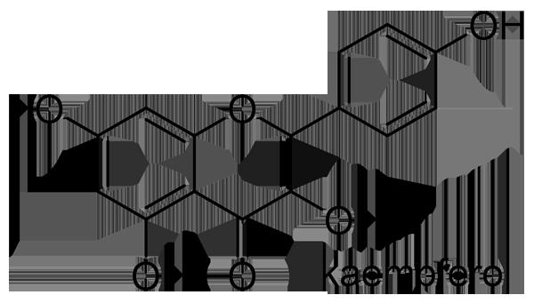 シラカシ 化学構造式2