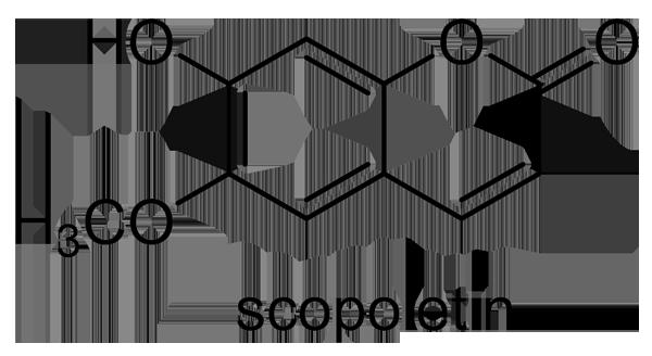 タブノキ 化学構造式3