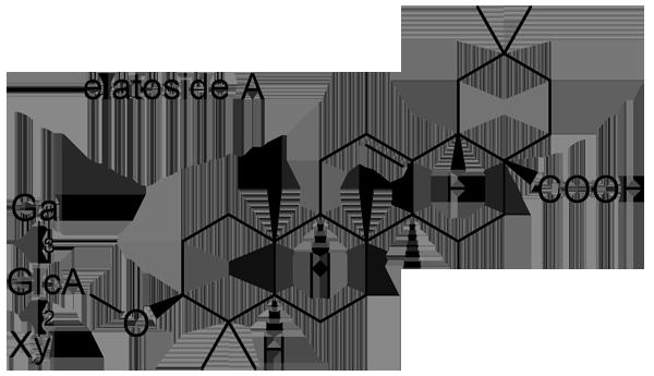 タラノキ 化学構造式2