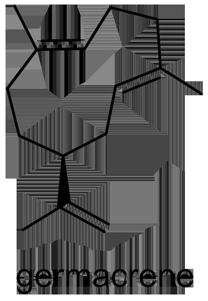 ハリギリ 化学構造式2