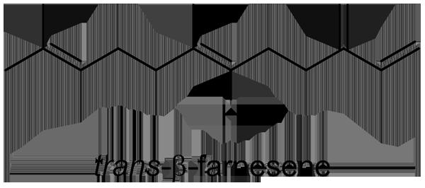 ハリギリ 化学構造式3