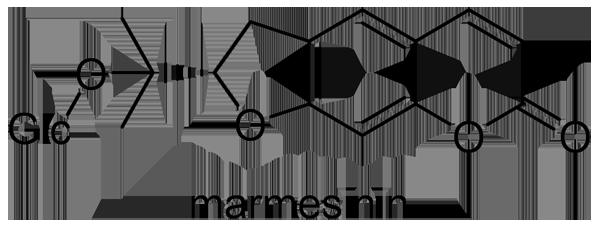 ヒュウガトウキ 化学構造式2
