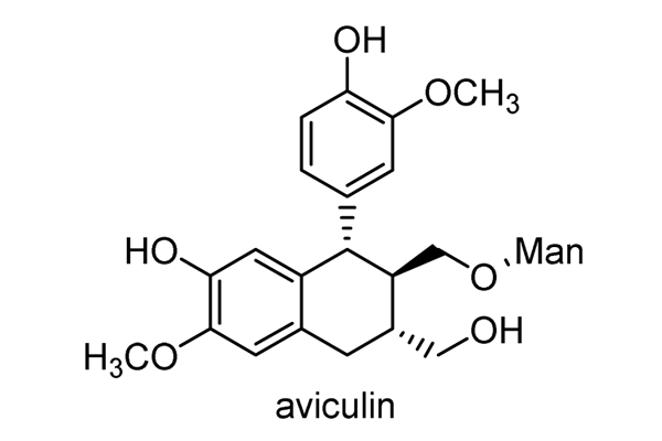 ヒサカキ 化学構造式4