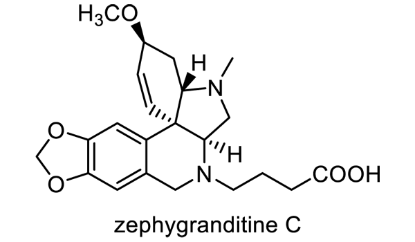 サフランモドキ 化学構造式1