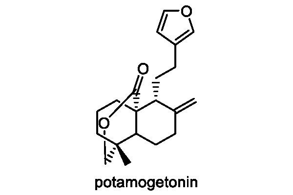 オヒルムシロ 化学構造式1