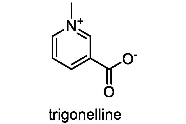 コーヒーノキ 化学構造式2