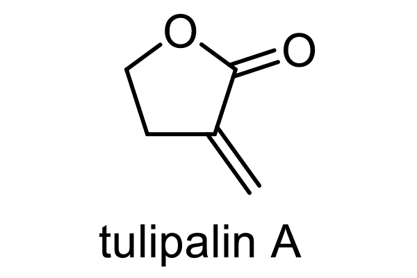 チューリップ 化学構造式1