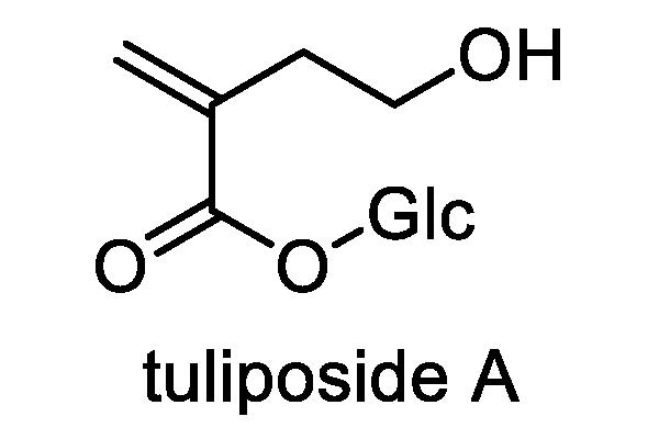 チューリップ 化学構造式2