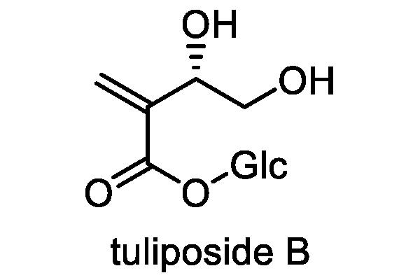 チューリップ 化学構造式3