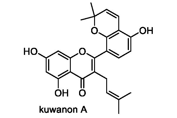 ヤマグワ 化学構造式2
