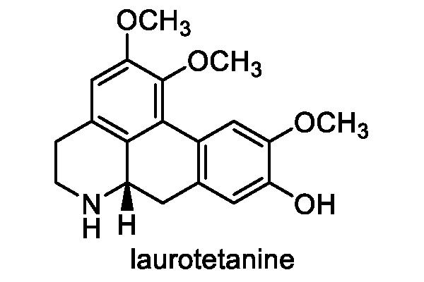 ヤマコウバシ 化学構造式1