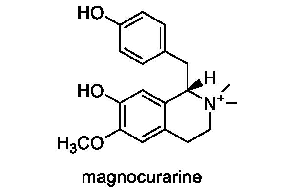 ヤマコウバシ 化学構造式3