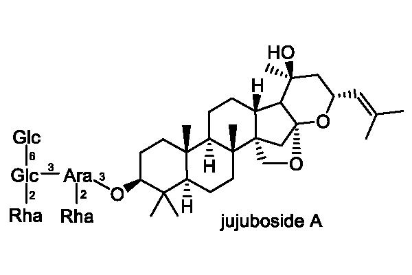 サネブトナツメ 化学構造式2
